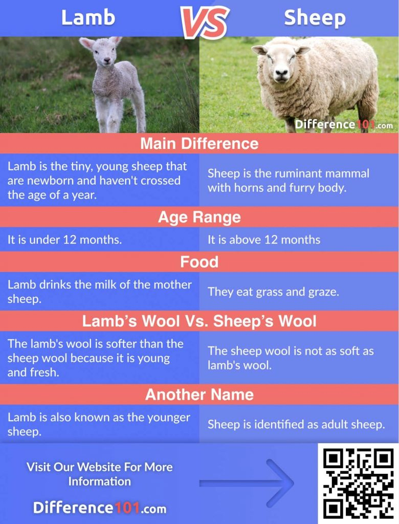 Lamb vs. Sheep: Let's look at their Differences, Similarities, their Pros and Cons, answer the top FAQs, and define which is better.