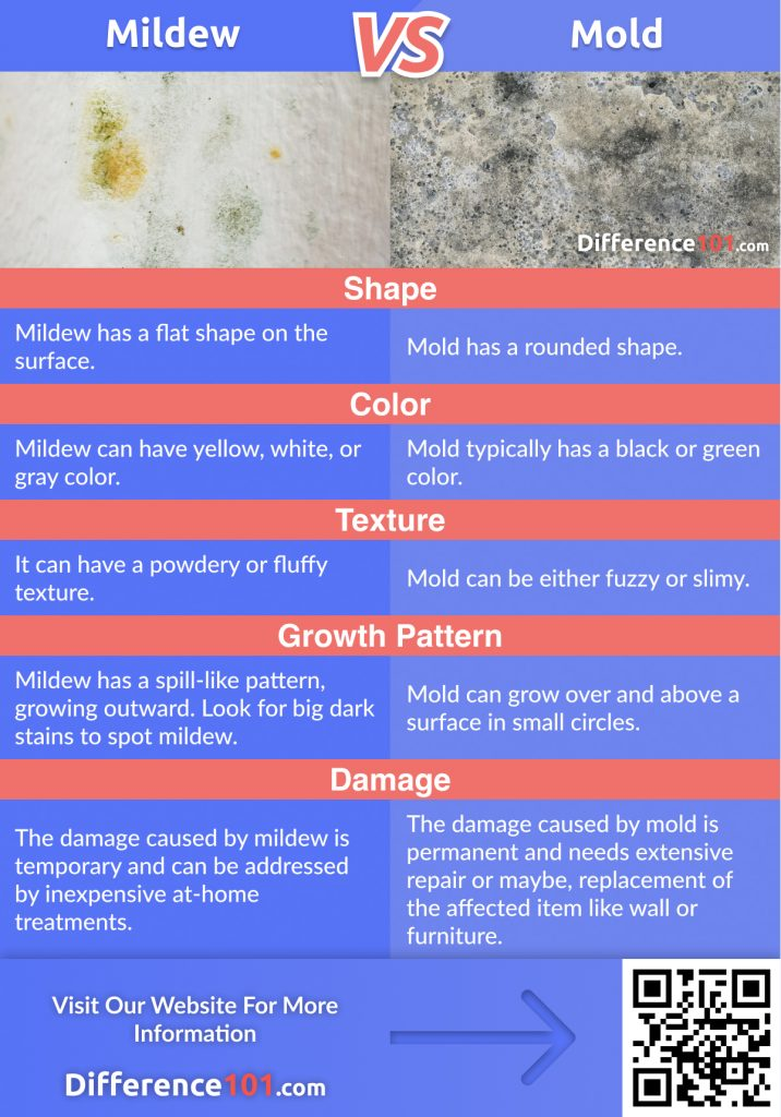 Mildew vs. Mold: Since mildew and mold are a type of fungi, it is easy to confuse them. Discover their Differences, Similarities, as well as their Pros & Cons.