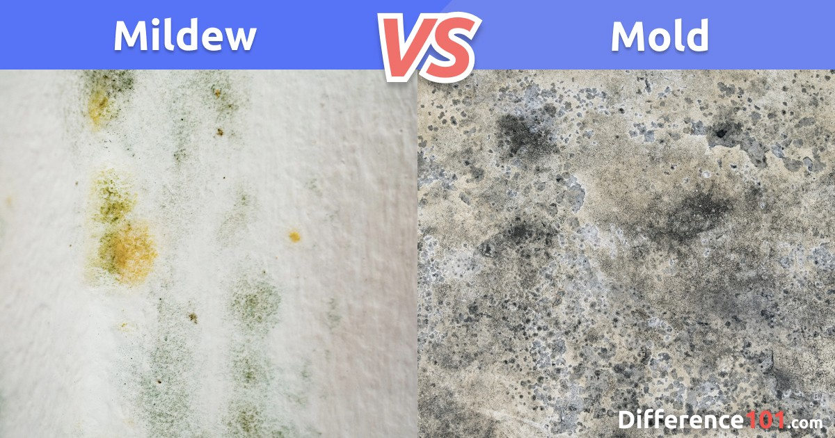Mildew vs. Mold: Differences, Similarities, Pros & Cons