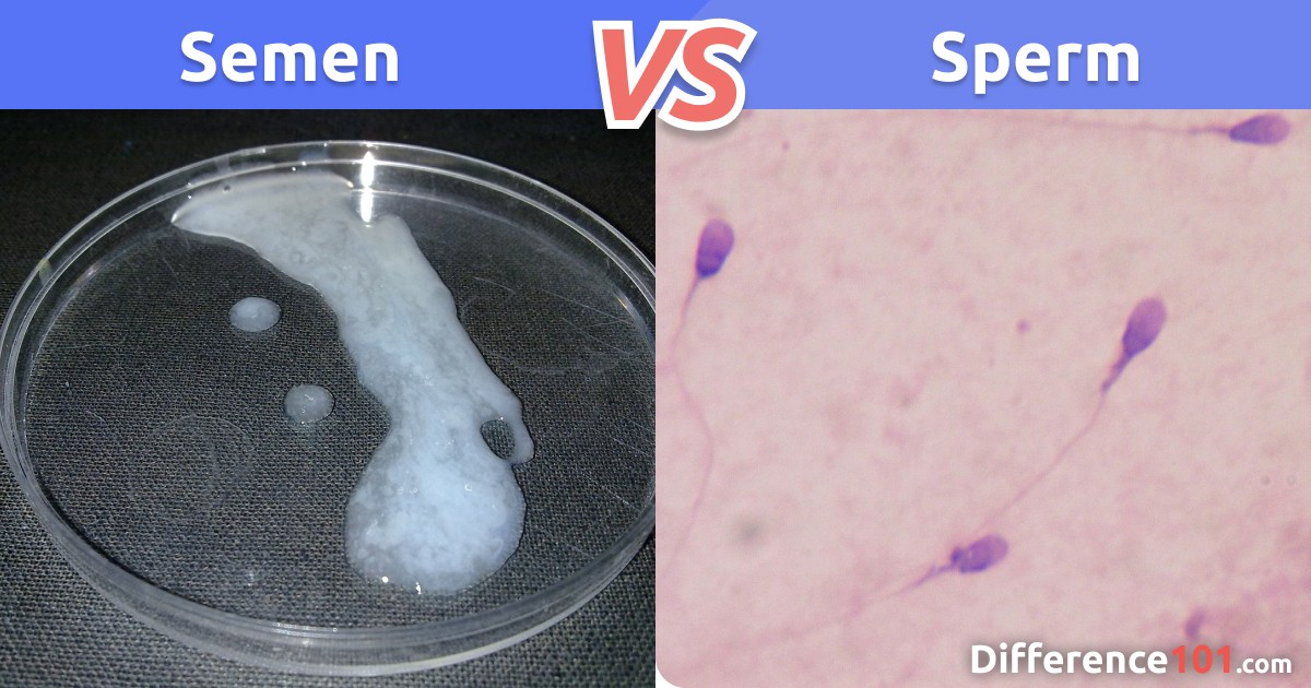 Semen vs. Sperm: Key Differences and FAQ