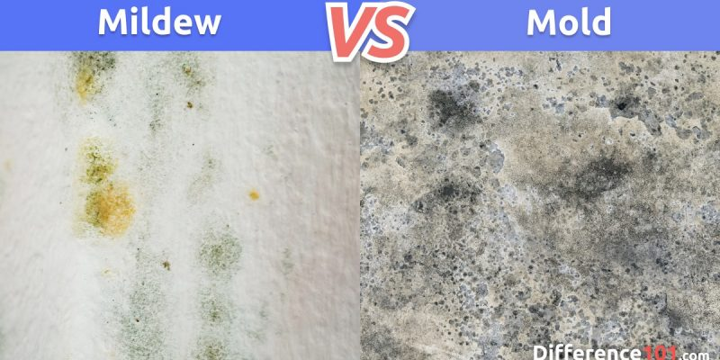 Mildew vs. Mold: What is the difference between Mildew and Mold?