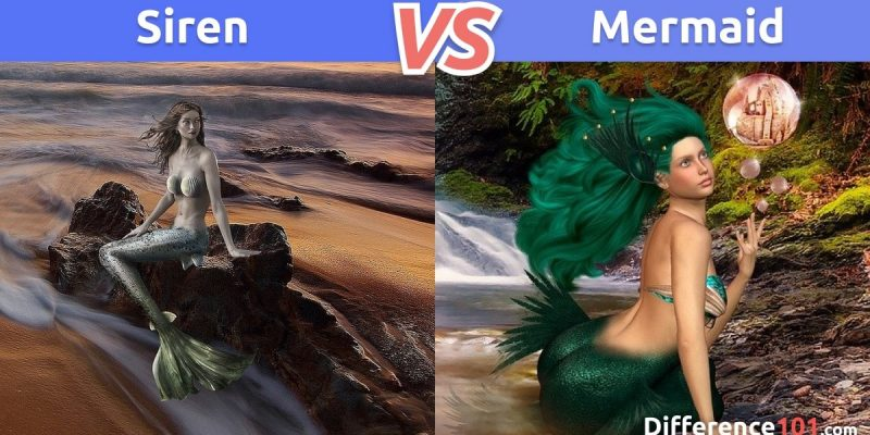Siren vs. Mermaid: What is the difference between Siren and Mermaid?